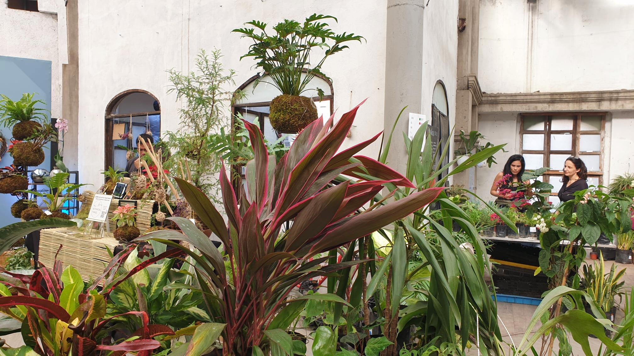 Plant Fest 2021 (Foto: Cortesía Plant Fest)