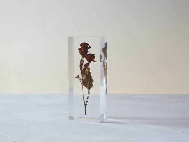 acryl dryflower