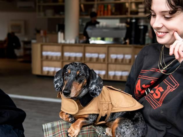 Woman holding sausage dog