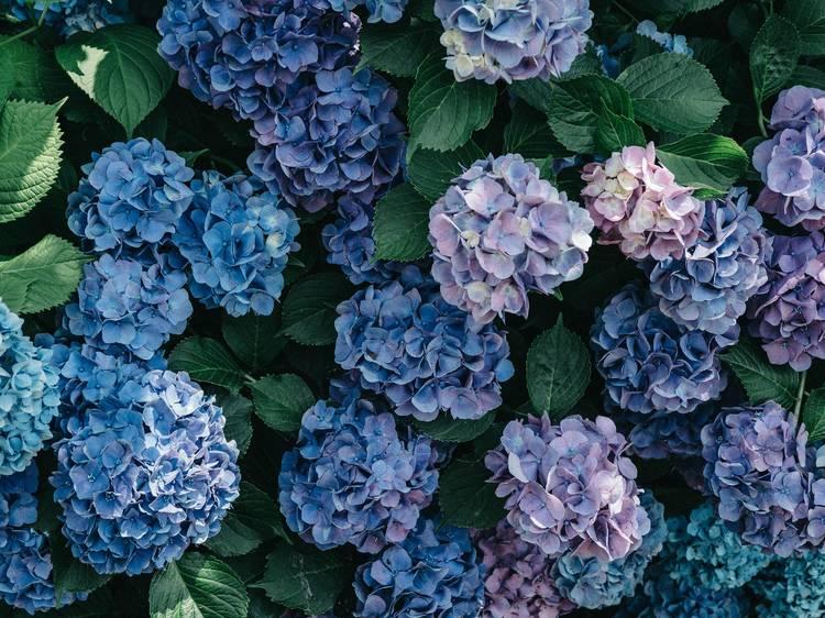 花に癒やされる。