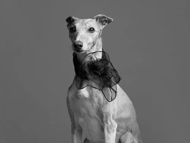 Dog Photog Fashion