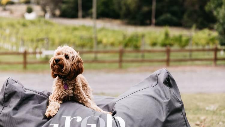 Dog at Rob Dolan Winery