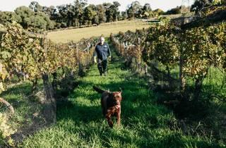 Rob Dolan Winery
