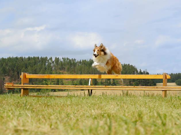 Lassie de Volta a Casa (2020)