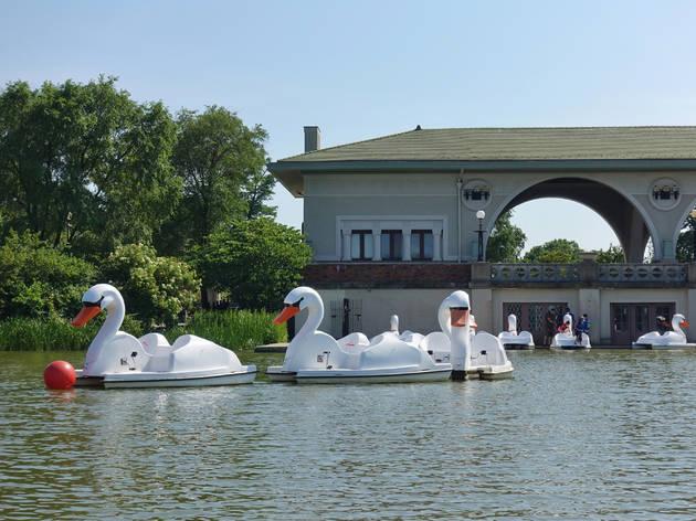 Botes cisne en la laguna del parque Humboldt