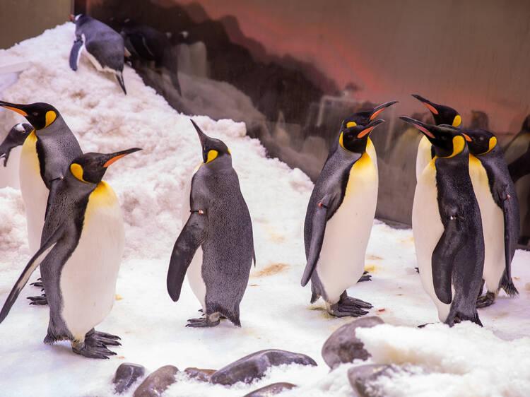 Melbourne Aquarium's virtual holiday camps