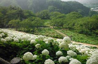 Tokyo Summerland Nature Village
