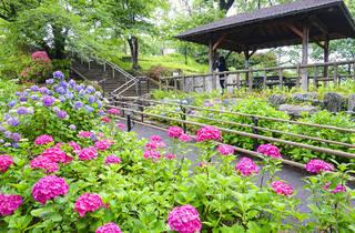 tenjou/PIXTA | Tamagawa Dai Park