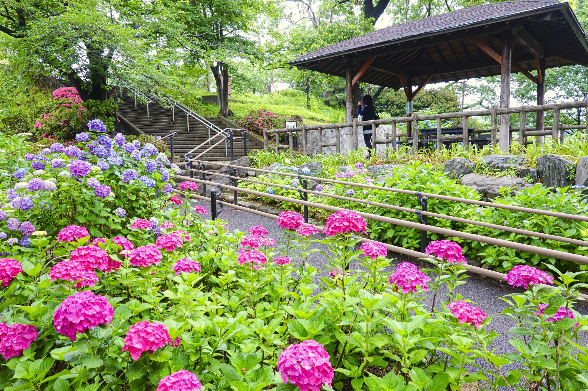 tenjou/PIXTA | Tamagawadai Park
