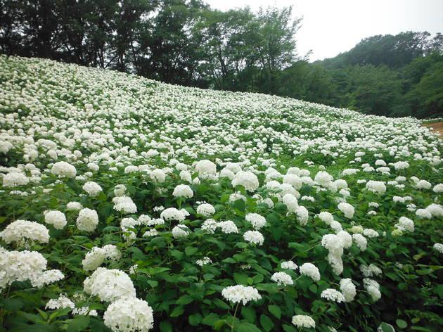 Tokyo Summerland, Wonderful Nature Village