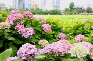 Symme-coco / Photo AC | Ueno Park