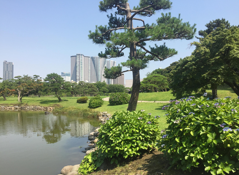 獣[ju]の一員/Photo AC | Hama-rikyu Gardens