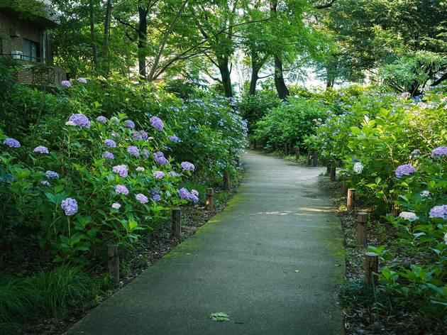 pianoman555/Photo AC | Hydrangea Park, Kodaira