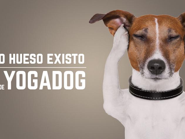 Yogadog