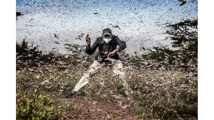Fighting Locust Invasion in East Africa