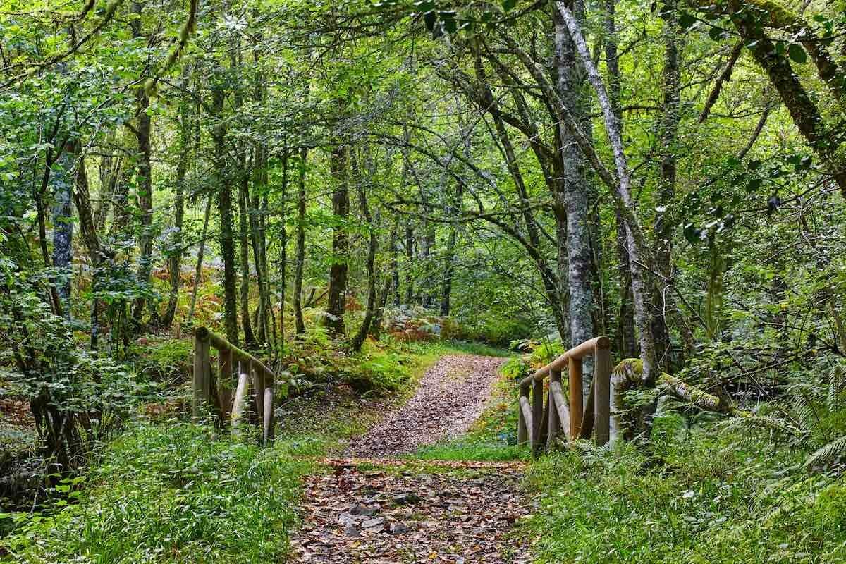 Bosque de Muniellos (Foto: Shutterstock)