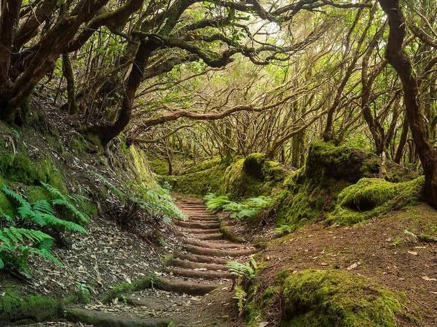 Los 9 bosques más impresionantes de España
