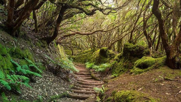 Bosque Encantado de Tenerife (foto: Shutterstock)