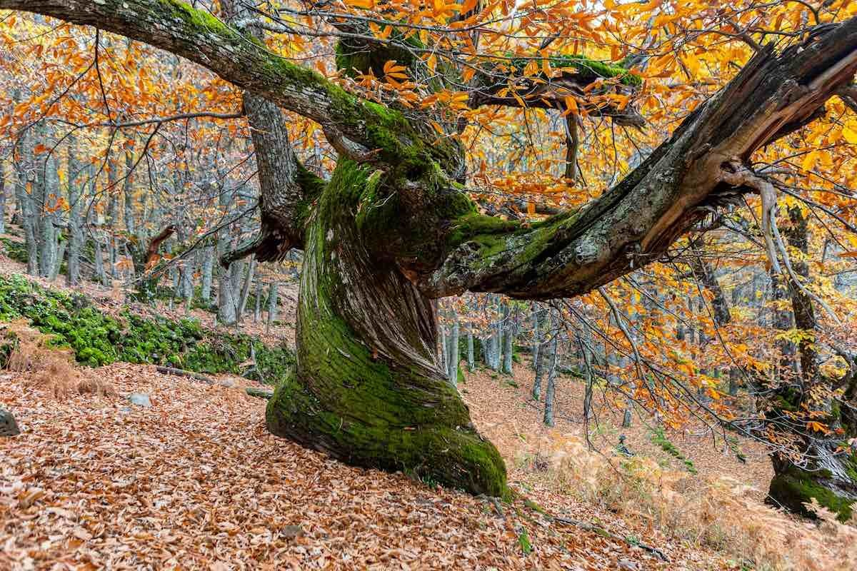 Valle de Ambroz (foto: Shutterstock)