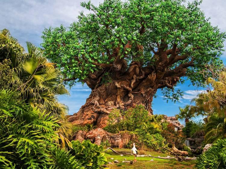 Disney's Animal Kingdom Theme Park, Walt Disney World
