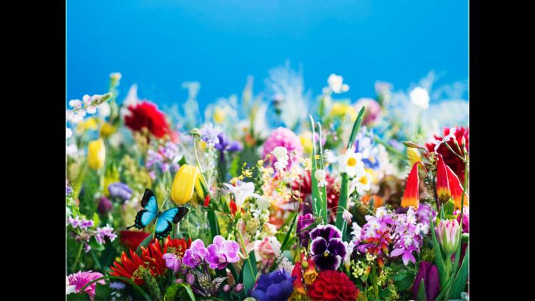 earthly flowers, heavenly colors (2017) ©mika ninagawa, Courtesy of Tomio Koyama Gallery