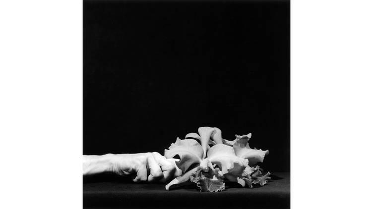 Fotografía en blanco y negro de Robert Mapplethorpe. Se encuentra una mano sosteniendo unas flores de manera horizontal.