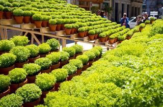 Instalação 'Flores de Manjerico' de FAHR 021.3