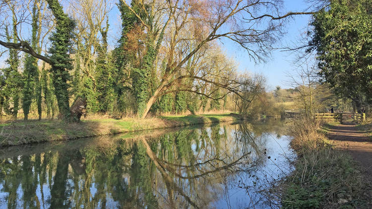 A calm stretch of the River Cam, surrounded by large trees that are reflected in the water, with a footpath to the right