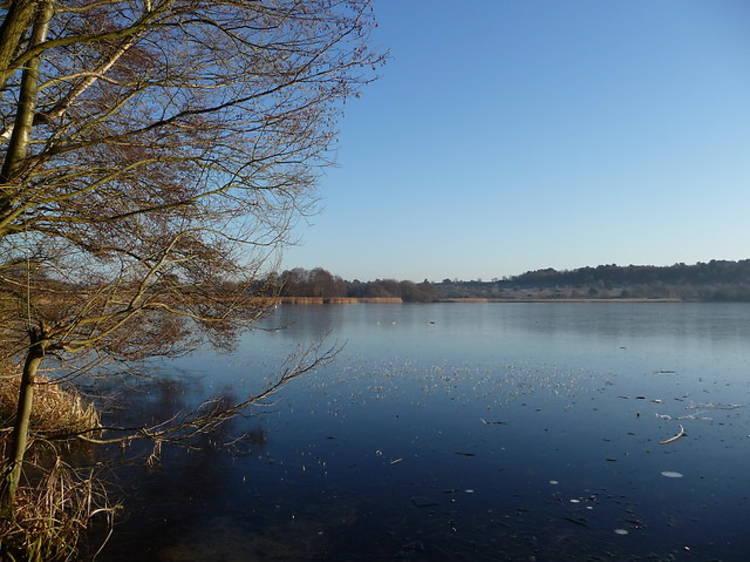 Frensham Great Pond, Frensham