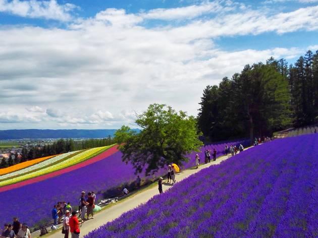 Furano-Biei Hokkaido