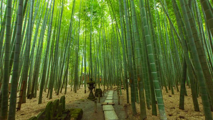 Bamboo garden, Houkoku-ji