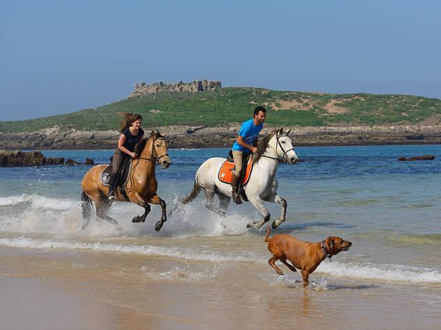 Férias, Hotéis, Herdade do Pessegueiro, Passeio a Cavalo