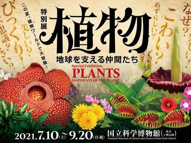 特別展「植物 地球を支える仲間たち」