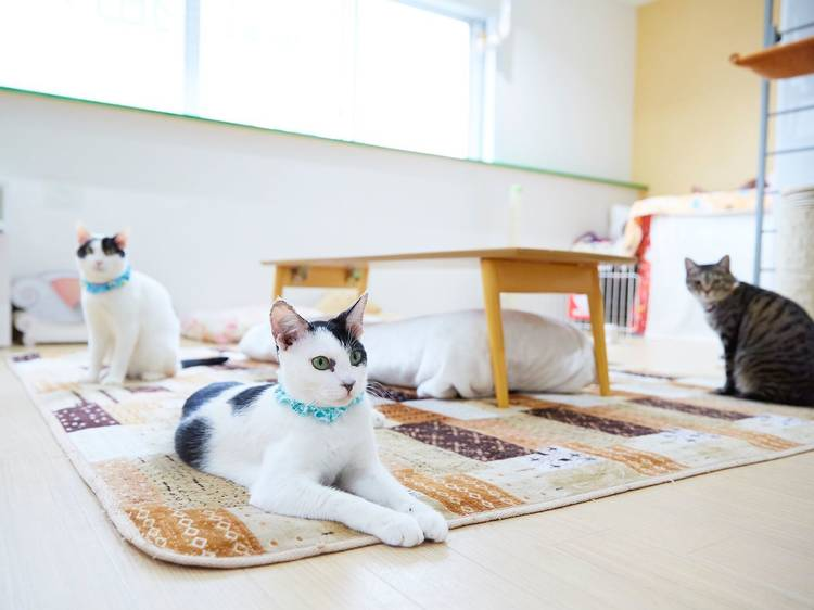 Hang out with rescue cats at Econeco
