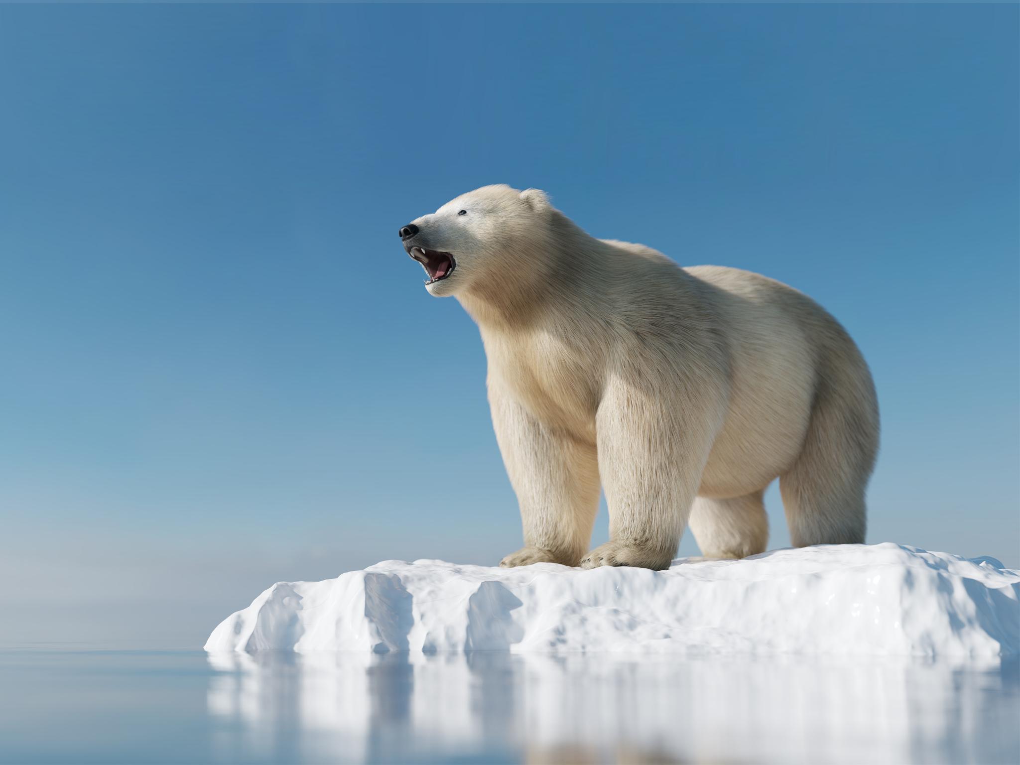 Ártico, la Expedición