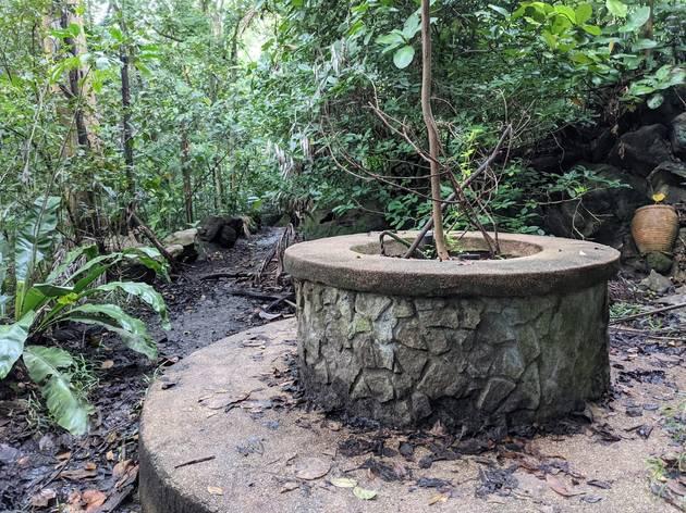 Bukit Batok Hillside Nature Park