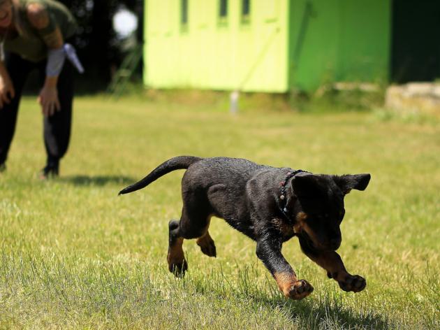 Off-leash dog areas