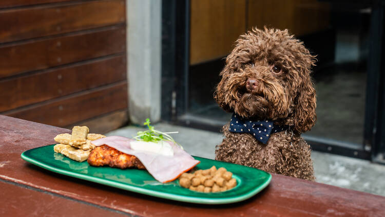 Dog-friendly pubs