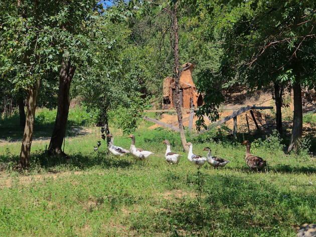 slavonia, slavonija, summer, ljeto, travel, trip, itinerary, papuk, ducks