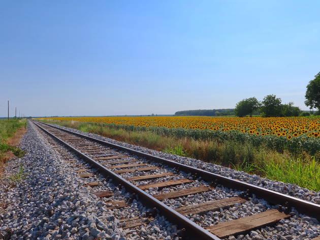 slavonia, slavonija, summer, ljeto, travel, trip, itinerary, train, traintrack, sunflower
