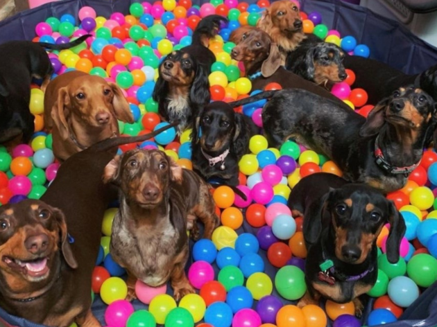 The best doggie daycares in Melbourne