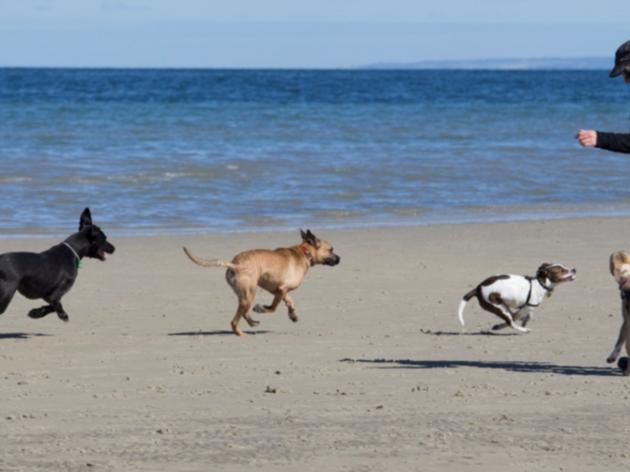 Dog-friendly weekend trips