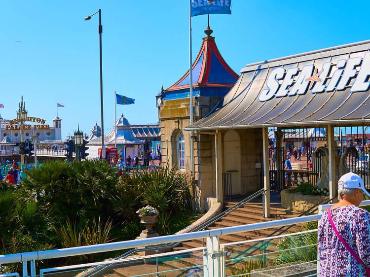 Brighton Beach and Sea Life Brighton
