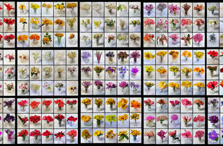 El ladrón de flores (Real Jardín Botánico)