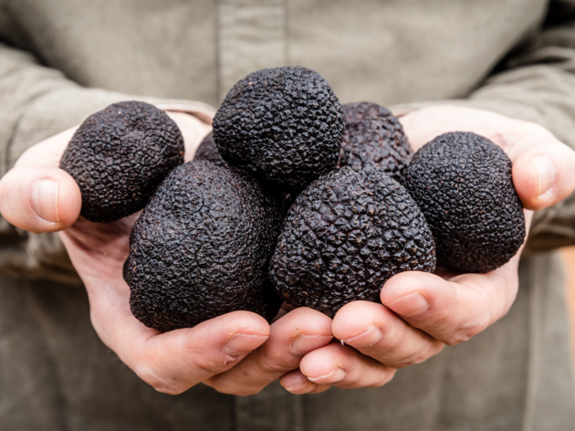 Get fresh truffles delivered to your door within 48 hours