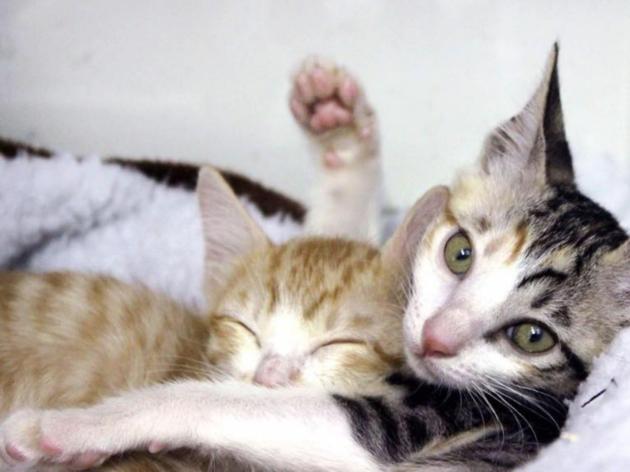 Hong Kong Cats Charity