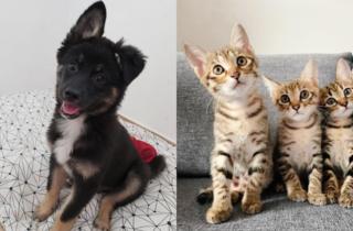 LAP (Lifelong Animal Protection Charity)