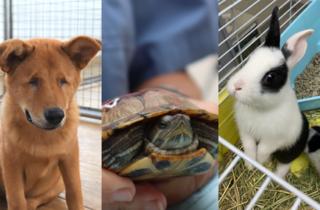 SPCA (HK) 香港愛護動物協會