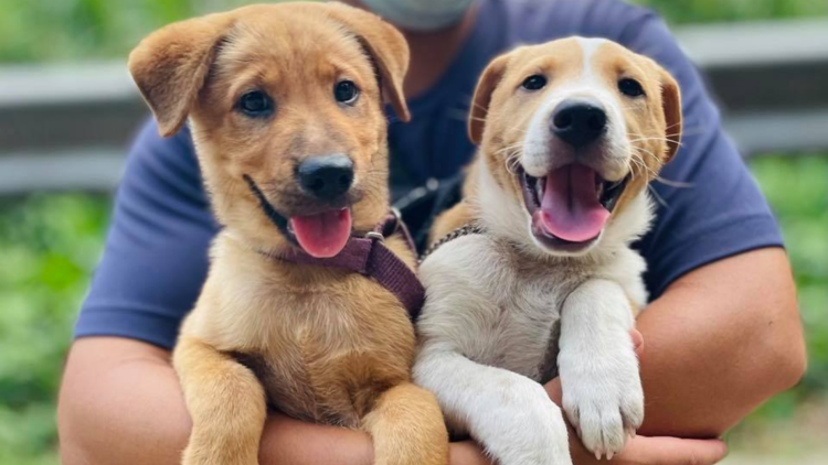 Hong Kong Dog Rescue (HKDR)