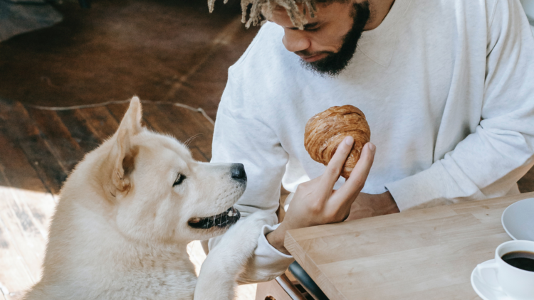Dog with man at cafe